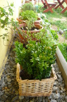 Buxus a bylinky