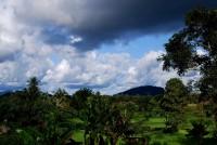 Liberie